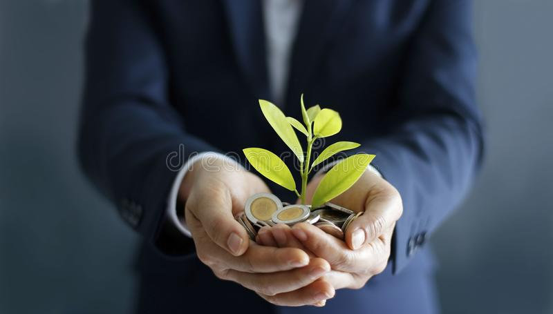Businessman hands with coins and sprout in palm. royalty free stock photos