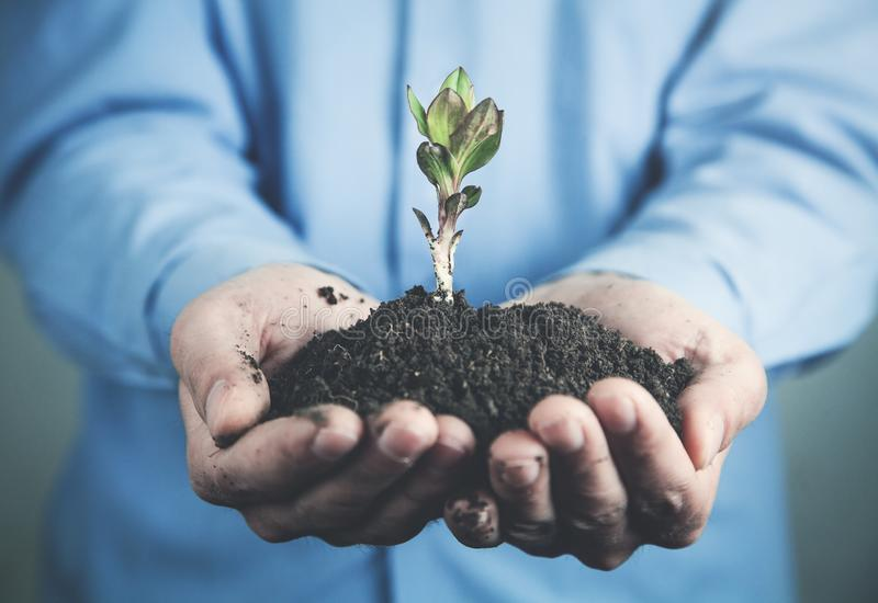 Businessman holding young plant. Business growth concept stock images