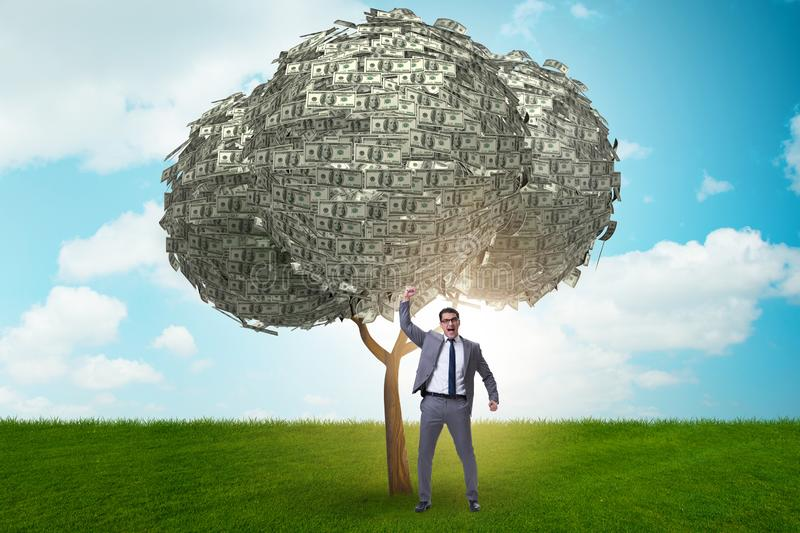 Businessman with money tree in business concept stock photography