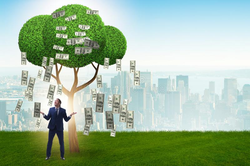 Businessman with money tree in business concept stock images