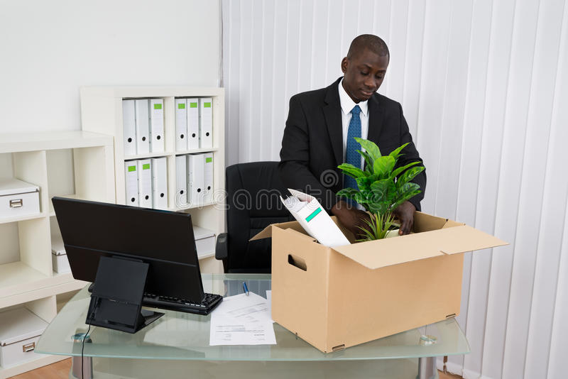 Businessman Packing Plant And Folders. Portrait Of Young Businessman Packing Plant And Folders In Cardboard Box royalty free stock photo