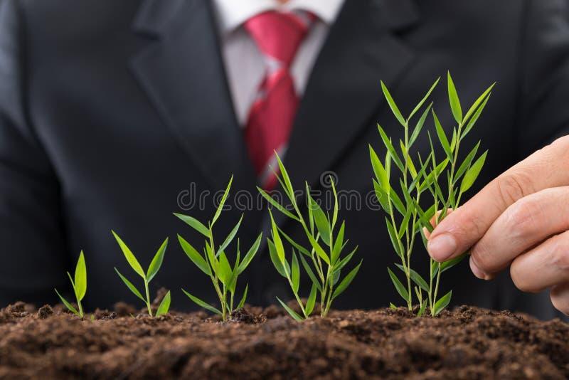 Businessman planting sapling. Close-up Photo Of A Businessman Planting Sapling royalty free stock photography