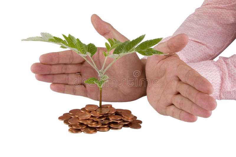 Download Businessman Protecting Plant Stock Photo - Image: 20187278