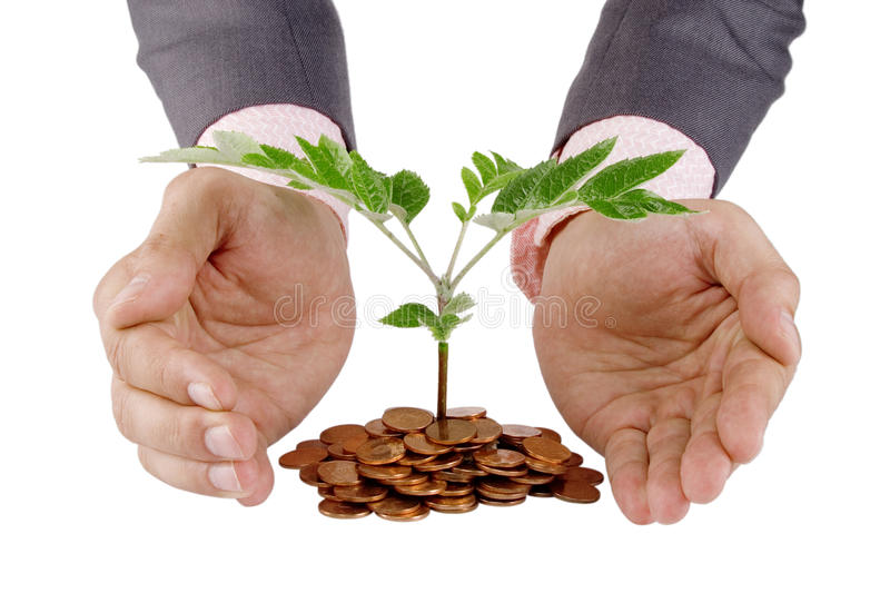 Download Businessman Protecting Plant Stock Photo - Image: 20187294
