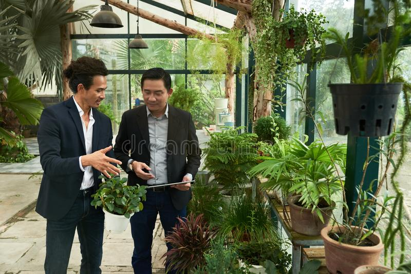 Entrepreneurs in orangery. Businessman showing plans to coworker in orangery royalty free stock photography