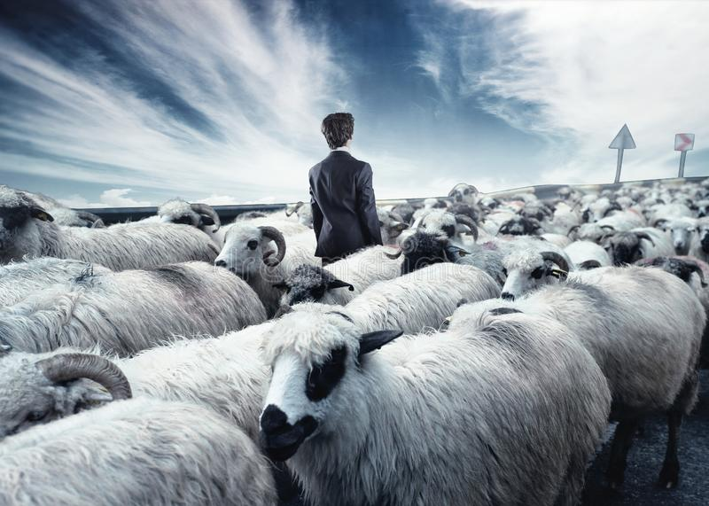 Businessman standing in the middle flock of sheep walking in opposite direction. Out of the box concept. Stand out from the crowd royalty free stock photography