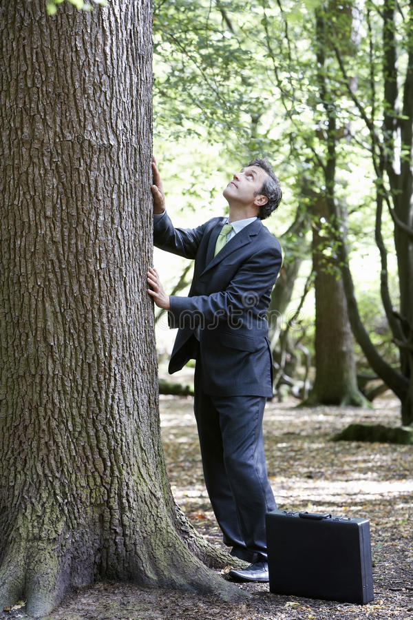 Businessman Stroking Tree Trunk In Forest stock image