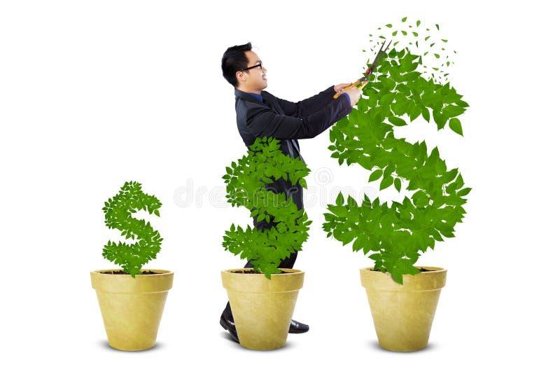Businessman treats the money trees stock photography