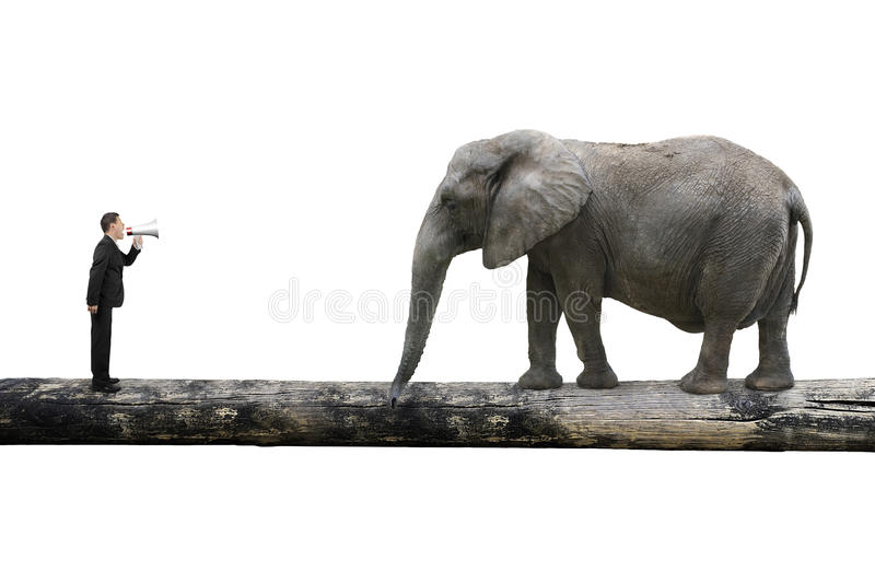Businessman using speaker yelling at elephant on single wooden b royalty free stock photo