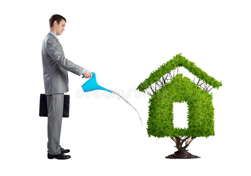 Businessman watering green plant in shape of house. Isolated on white background. Business growth and development. Green and eco friendly technology. Real stock image