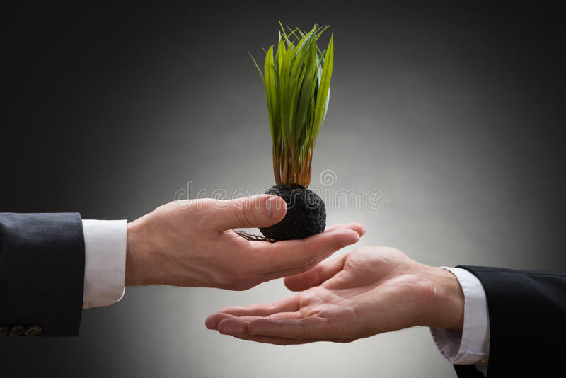 Businessperson giving sapling to the businessman. Close-up Of Businessperson Hand Giving Sapling To The Businessman Hand stock image