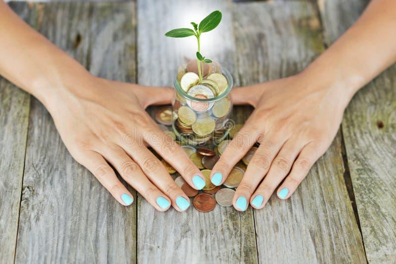 Businesswoman's gömma i handflatan skydda en grön växt som mycket växer från en krus av kassapengar, besparingar eller inkomsts royaltyfri foto