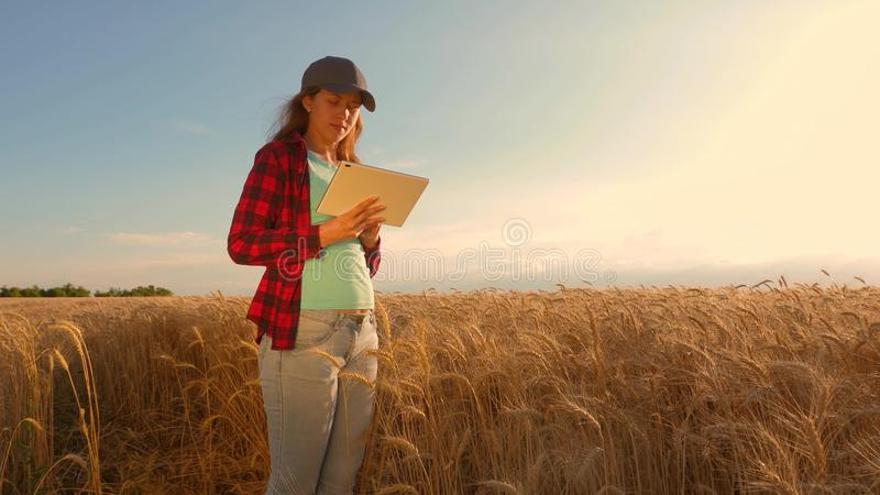 Businesswoman with a tablet studies wheat crop in field. Farmer woman works with a tablet in a wheat field, plans a royalty free stock photography