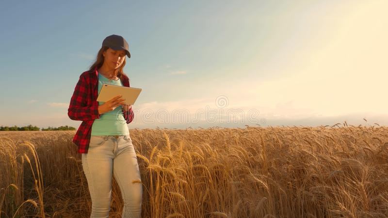 Businesswoman with a tablet studies wheat crop in field. Farmer woman works with a tablet in a wheat field, plans a stock images