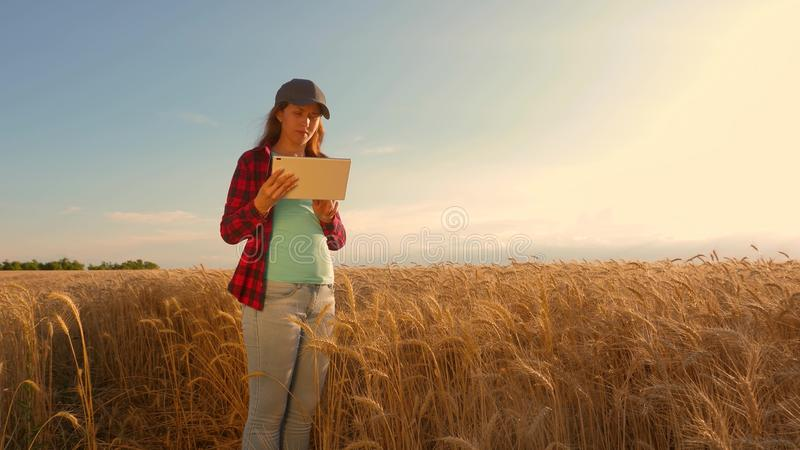 Businesswoman with a tablet studies wheat crop in field. Farmer woman works with a tablet in a wheat field, plans a stock image