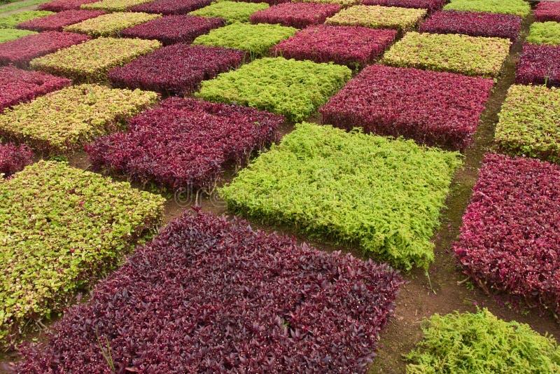 buskar färgrika madeira fotografering för bildbyråer
