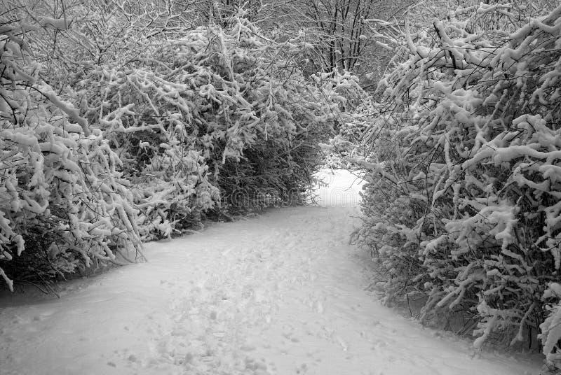 Buske Fodrad Trail Royaltyfri Foto