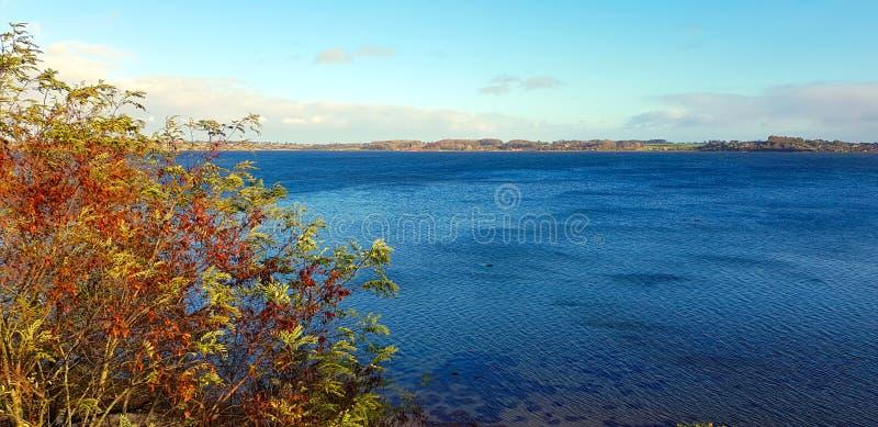 Buske på sjön fotografering för bildbyråer