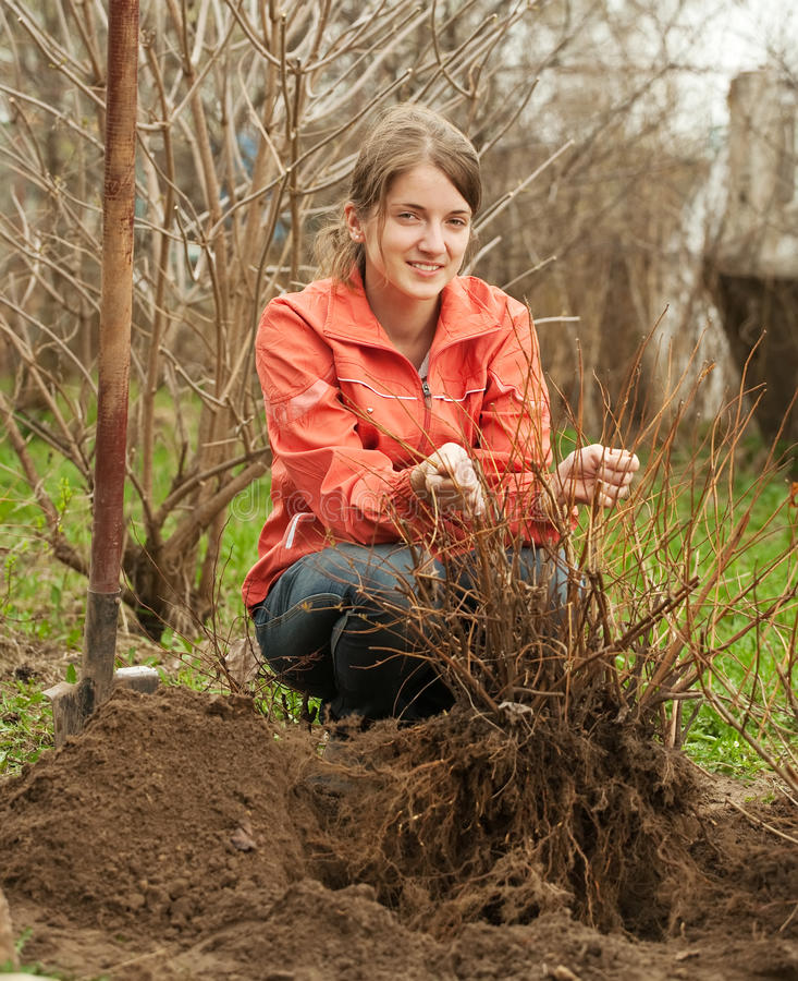 buske som nollställer groddkvinnan royaltyfri foto