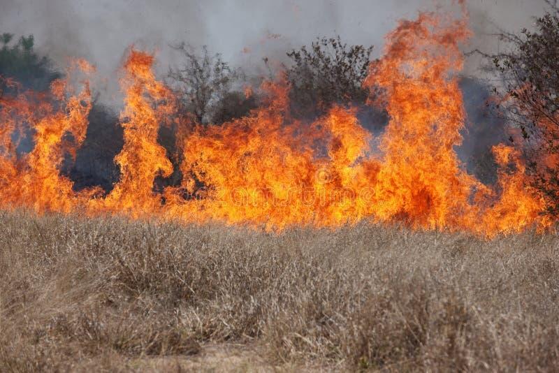 buskebrand royaltyfri bild