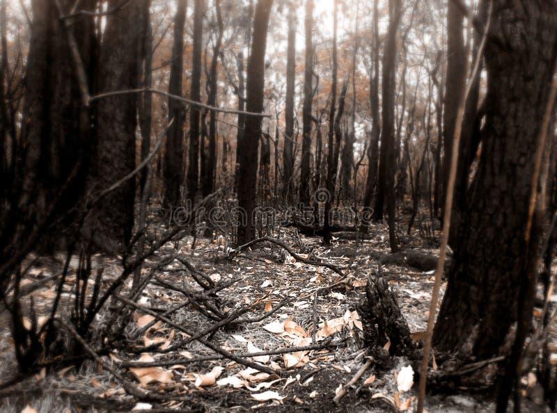 Buskebrandplats Arkivfoto