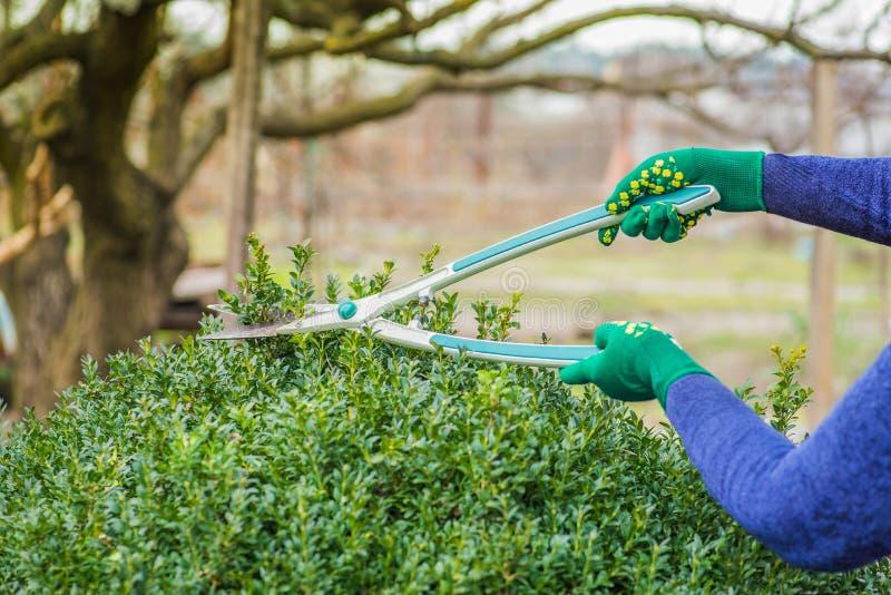 busken klipper kvinnan royaltyfri fotografi