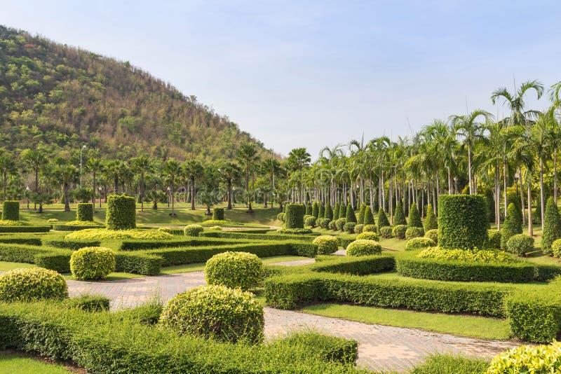 Busken som klipper dekorativ gräsplan, parkerar offentligt och gräsfältet fotografering för bildbyråer