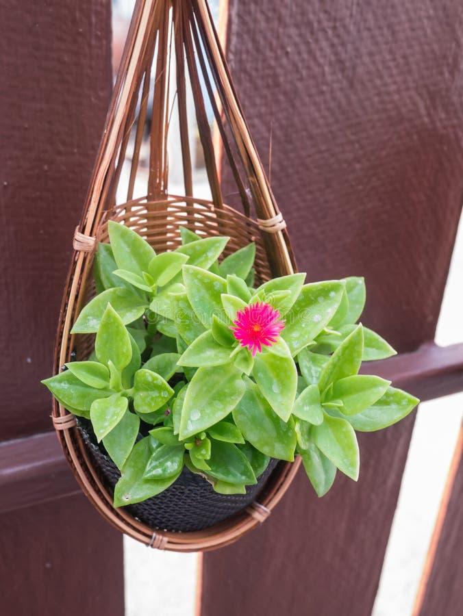 busket del fiore fotografia stock libera da diritti