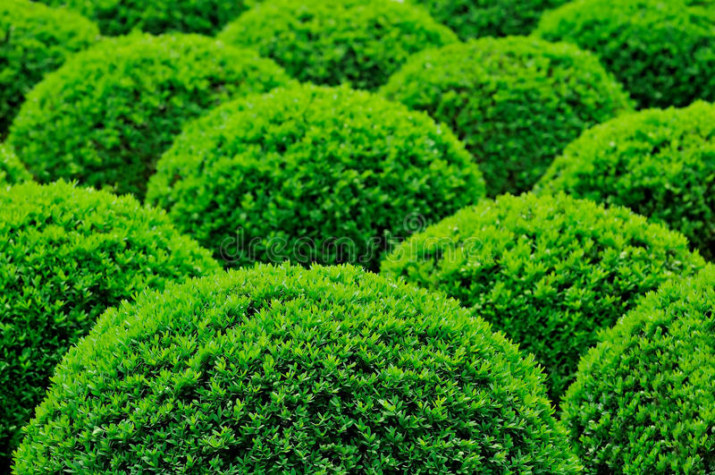 busketrädgård royaltyfria bilder
