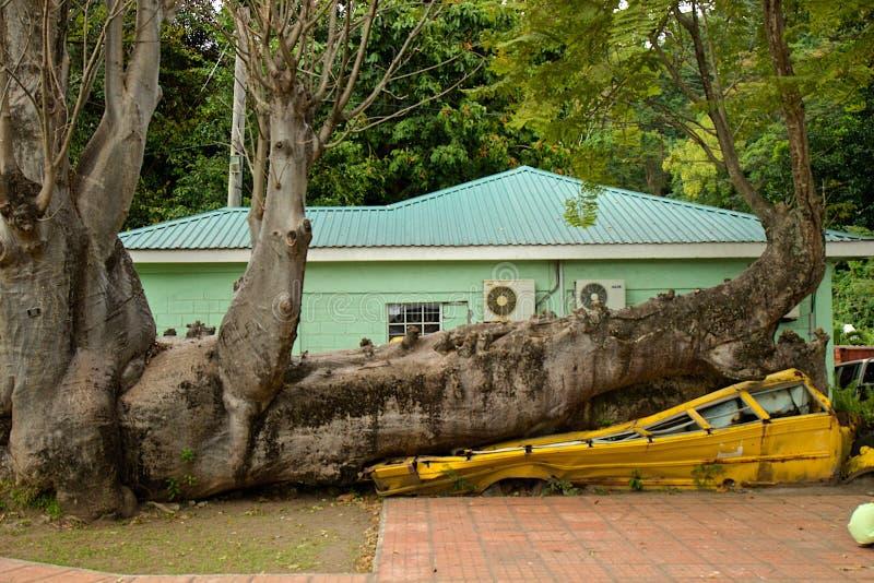Bussen plattade till i orkan vid baobaben i Dominica royaltyfria foton
