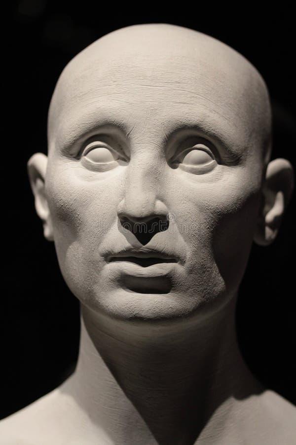 Human head model. A bust of a generic caucasian human head stock image