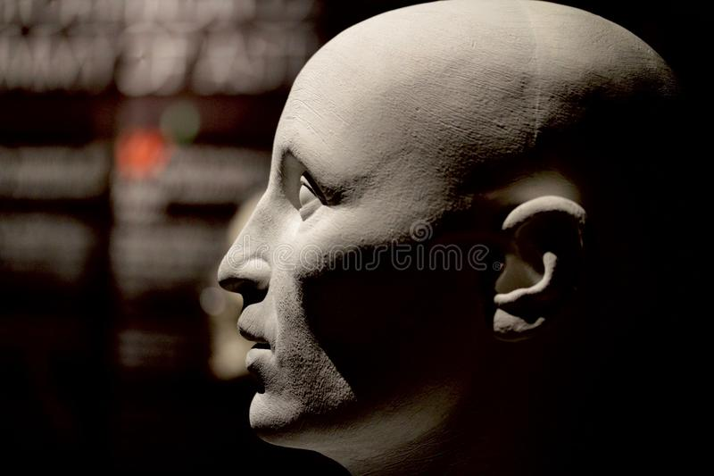 Human head model. A bust of a generic caucasian human head royalty free stock photo