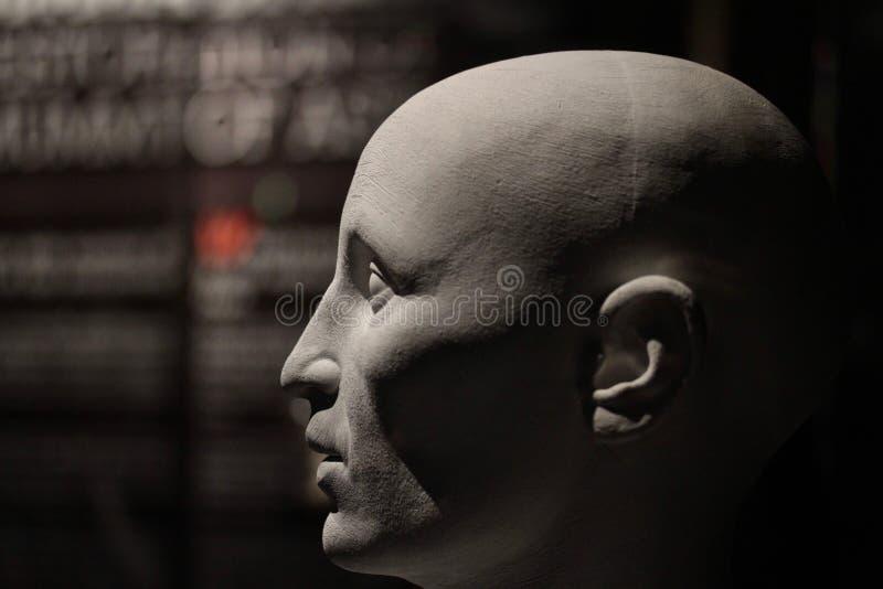 Human head model. A bust of a generic caucasian human head stock photo