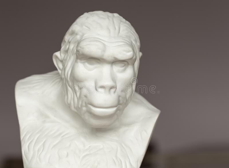 Bust of Pithecanthropus for study in the study of biology in secondary school. Kamchatka, Russia - 5 SEP, 2018: Bust of Pithecanthropus for study in the study of stock photo