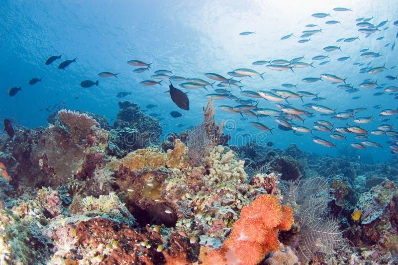 Download Bustling Reef stock image. Image of ocean, nature, reef - 4813485