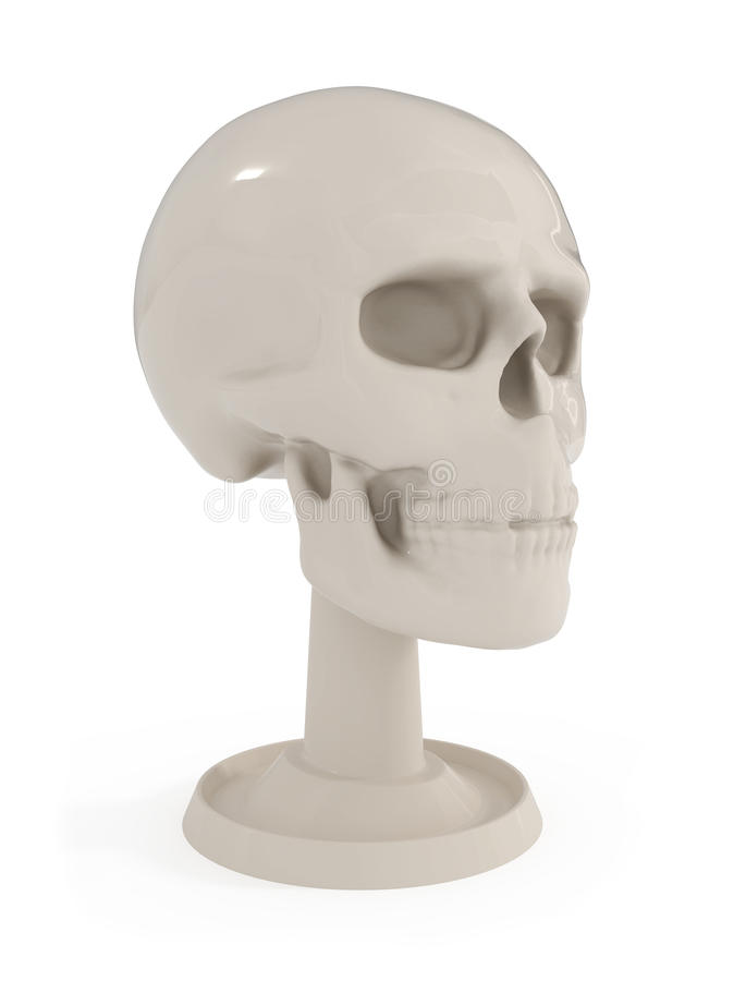 Busto del cranio - anatomia umana isolata su bianco illustrazione di stock