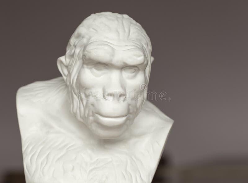 Busto del Pithecanthropus para el estudio en el estudio de la biología en escuela secundaria foto de archivo