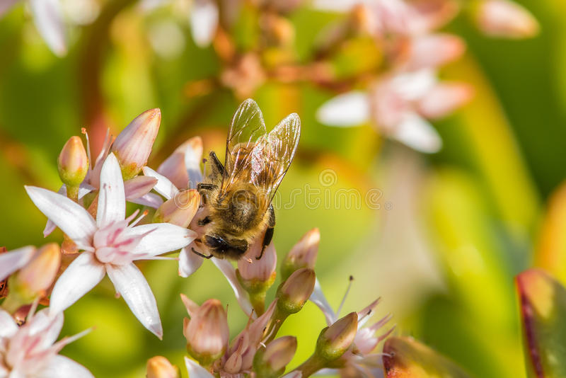 `Busy As a Bee` 2-3 stock image
