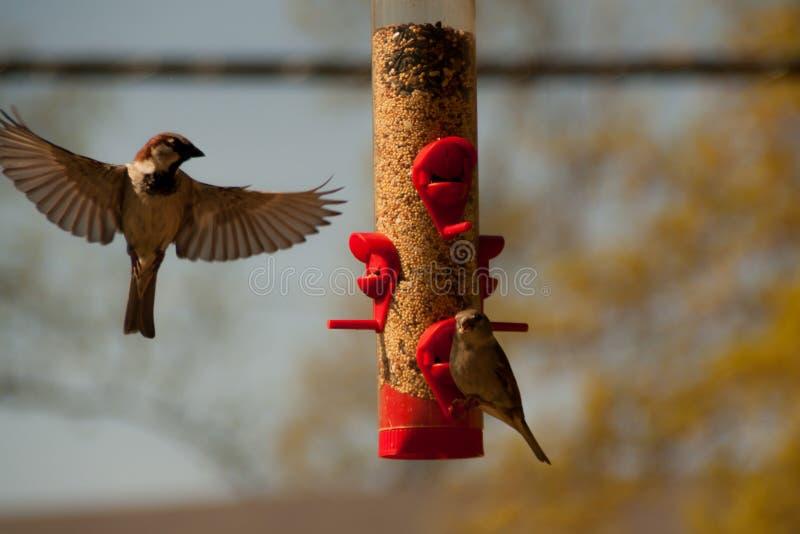 Busy bird feeder stock photo