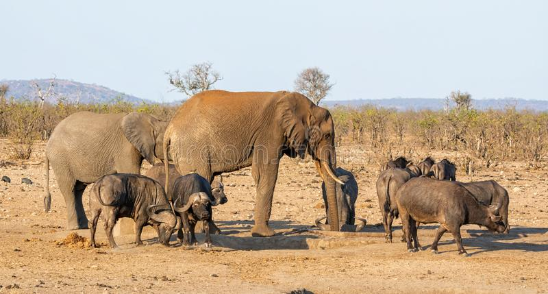 Busy Watering Hole. A busy watering hole in Southern African savanna royalty free stock photography