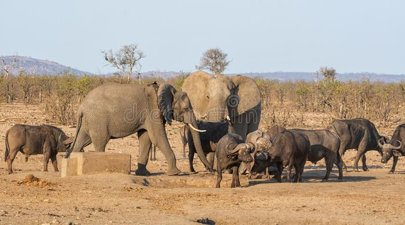 Busy Watering Hole. A busy watering hole in Southern African savanna royalty free stock photo