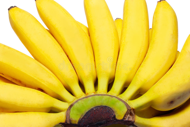 Butch di piccole banane. fotografie stock libere da diritti