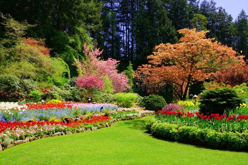 Butchart庭院,维多利亚,加拿大,充满活力的春天颜色 图库摄影