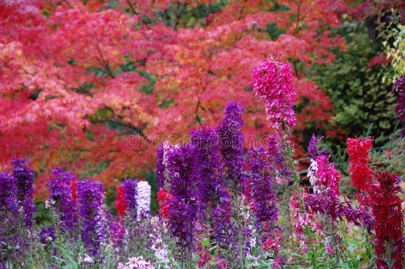 butchart κήποι λουλουδιών στοκ φωτογραφία με δικαίωμα ελεύθερης χρήσης