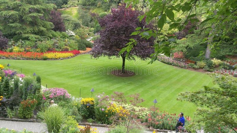Butchart Gardens royalty free stock image