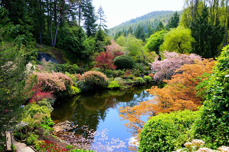 Butchart Gardens, Victoria, Canada, pond with vibrant spring flowers. Butchart Gardens, Victoria, Canada. View over a pond in the sunken garden with vibrant stock images