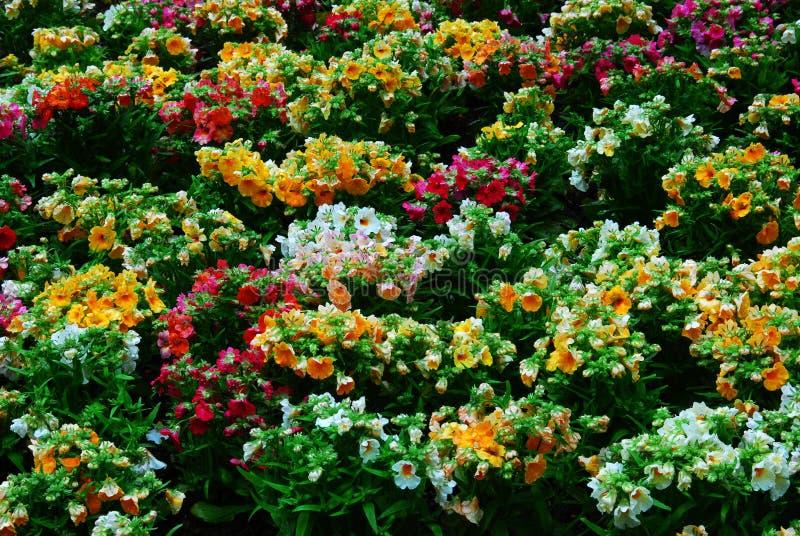 butchart ogrody kwiatowe fotografia royalty free