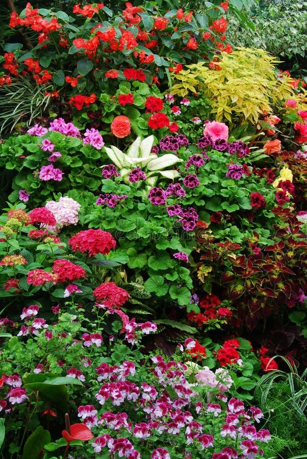 butchart ogrody kwiatowe zdjęcia royalty free