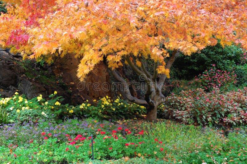 butchart uprawia ogródek drzewa obraz royalty free
