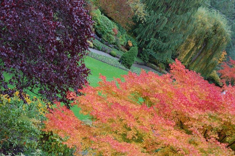 butchart uprawia ogródek drzewa obraz stock